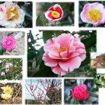 万葉の森公園 早春の花