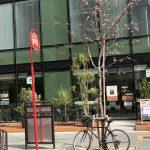 「BAUM HAUS(バウムハウス)」がロフト名古屋の隣にオープンします!